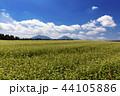 畑 花 空の写真 44105886