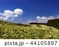 畑 風景 空の写真 44105897