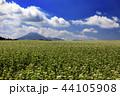 畑 花 空の写真 44105908