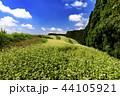 畑 風景 空の写真 44105921