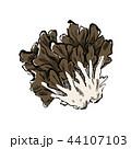 舞茸 キノコ 白バックのイラスト 44107103