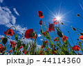【埼玉】天空のポピー 埼玉の有名スポット 44114360
