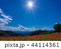 【埼玉】天空のポピー 埼玉の有名スポット 44114361