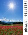 【埼玉】天空のポピー 埼玉の有名スポット 44114364