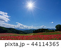 【埼玉】天空のポピー 埼玉の有名スポット 44114365