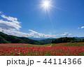 【埼玉】天空のポピー 埼玉の有名スポット 44114366