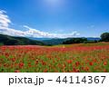 【埼玉】天空のポピー 埼玉の有名スポット 44114367