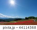 【埼玉】天空のポピー 埼玉の有名スポット 44114368