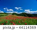 【埼玉】天空のポピー 埼玉の有名スポット 44114369