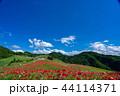 【埼玉】天空のポピー 埼玉の有名スポット 44114371