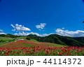 【埼玉】天空のポピー 埼玉の有名スポット 44114372