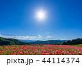 【埼玉】天空のポピー 埼玉の有名スポット 44114374