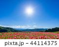 【埼玉】天空のポピー 埼玉の有名スポット 44114375