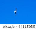 カモメ 44115035