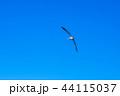 カモメ 44115037