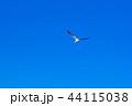 カモメ 44115038