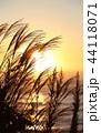 すすき 夜明け 植物の写真 44118071