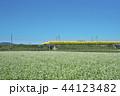 ソバ畑のDr.イエロー 44123482