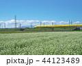ソバ畑のDr.イエロー 44123489