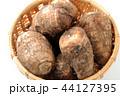 里芋 根菜 芋の写真 44127395