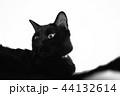 横顔の黒猫 44132614