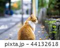 街の中の野良猫 44132618