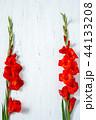フラワー 花 グラジオラスの写真 44133208