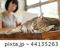 ねこ ネコ 猫の写真 44135263