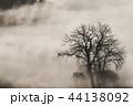樹木 樹 ツリーの写真 44138092