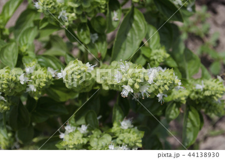 Growing bio vegetables in the northern Bulgaria 44138930