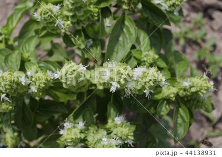 Growing bio vegetables in the northern Bulgaria 44138931