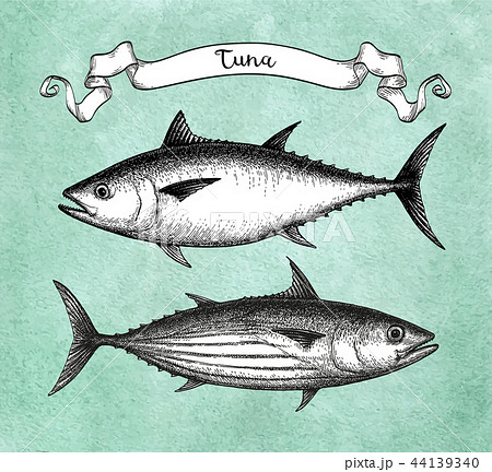 Ink sketch of tuna. 44139340