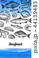 海 魚 海原のイラスト 44139483