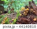 苔 きのこ キノコの写真 44140810