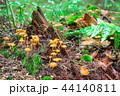 苔 きのこ キノコの写真 44140811