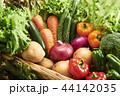 新鮮野菜の集合 44142035