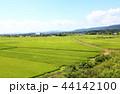 風景 田んぼ 田園の写真 44142100