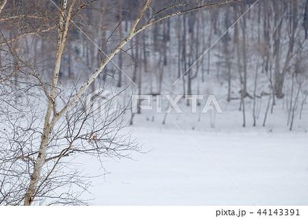 雪原 (背景ボケ) 44143391