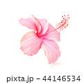 お花 フラワー 咲く花の写真 44146534