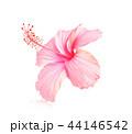 お花 フラワー 咲く花の写真 44146542
