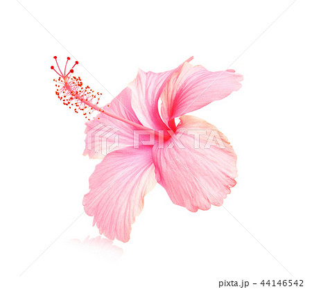 Flowers on a white background. 44146542