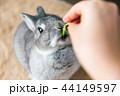 うさぎ おやつ 食べる 44149597