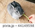 うさぎ おやつ 食べる 44149598