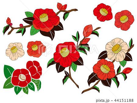 椿の花イラスト素材のイラスト素材 44151188 Pixta