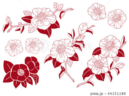椿の花イラスト素材のイラスト素材 44151189 Pixta