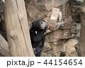 マレーグマ 熊 子供の写真 44154654