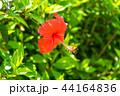 沖縄の風景04 44164836