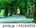 備瀬のフクギ並木道01 44164838