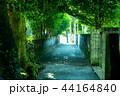 備瀬のフクギ並木道03 44164840
