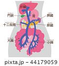 門脈 消化器系 脾臓 ボディグレー 44179059
